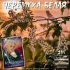 Борис Логинов «Черёмуха белая» 2017